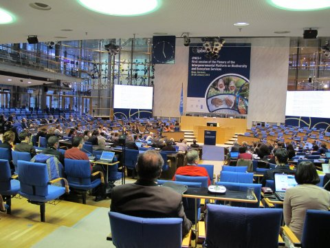 Wird der Weltbiodiversitätsrat IPBES Ergebnisse generieren, die helfen, dem Verlust der Biodiversität Einhalt zu gebieten? Foto: Marie Vandewalle/UFZ