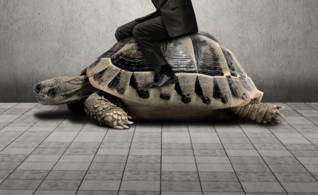 Träges Wissen um Innovation » WILD DUECK BLOG » SciLogs - Wissenschaftsblogs